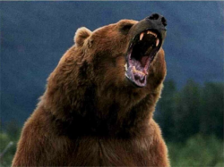 grizzly-tgv.png